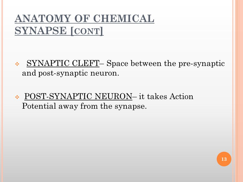 ANATOMY OF CHEMICAL SYNAPSE [cont]